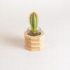 Portapiantina in legno di faggio