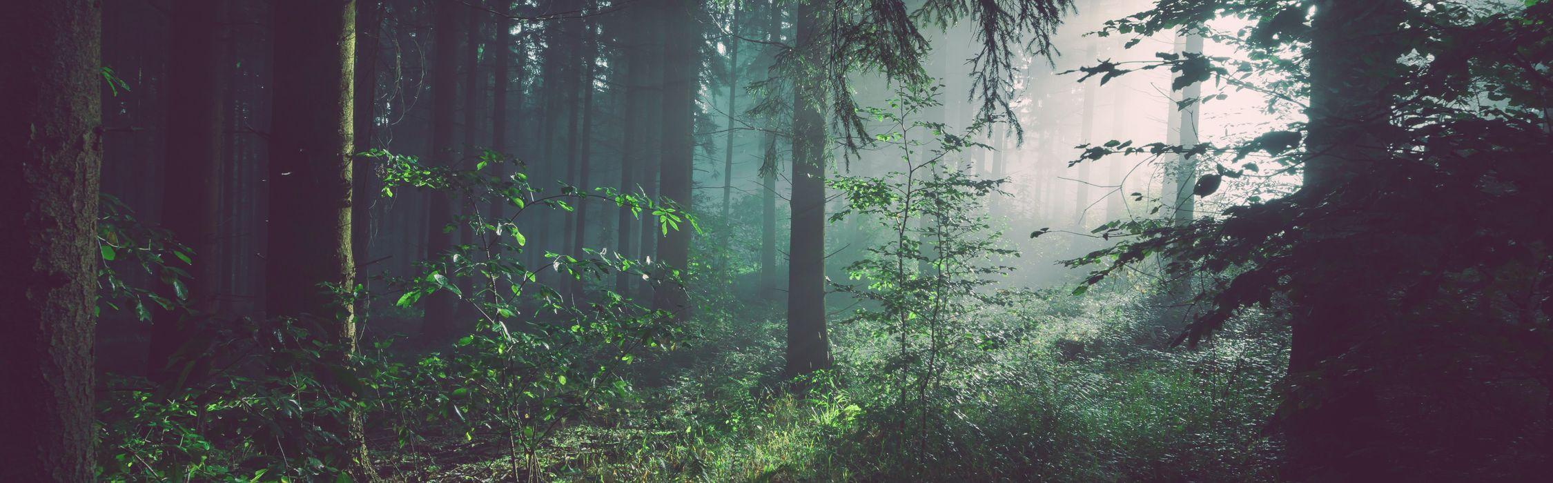 particolare di un bosco nella penombra